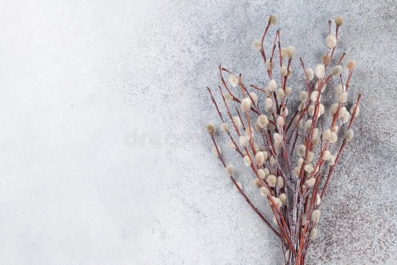 Willow. On rustic stone background with copy space. Easter greeting card royalty free stock images