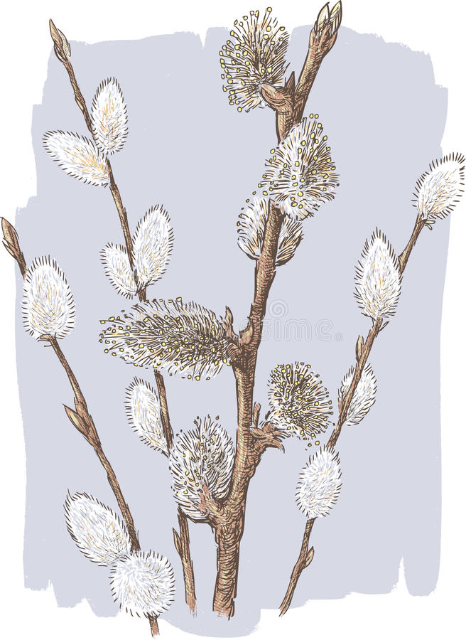 willow twigs royalty free illustration