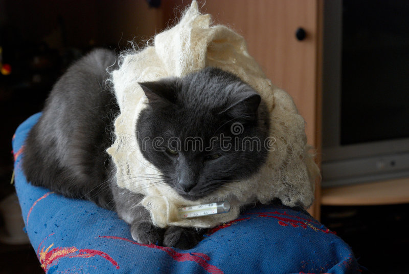 pussycat στοκ φωτογραφία