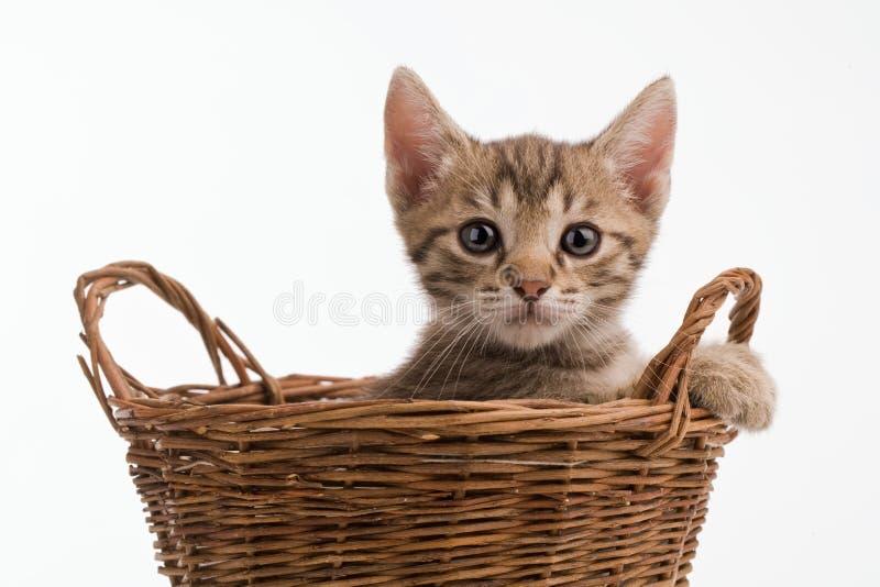 Pussycat zdjęcia stock