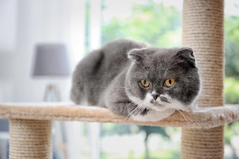Pussycat sveglio sull'albero del gatto immagine stock libera da diritti