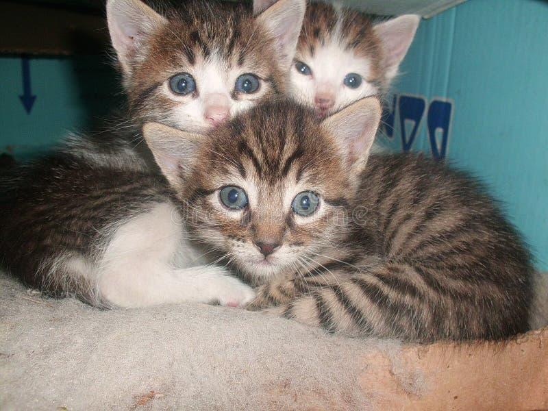 pussycats стоковое изображение rf