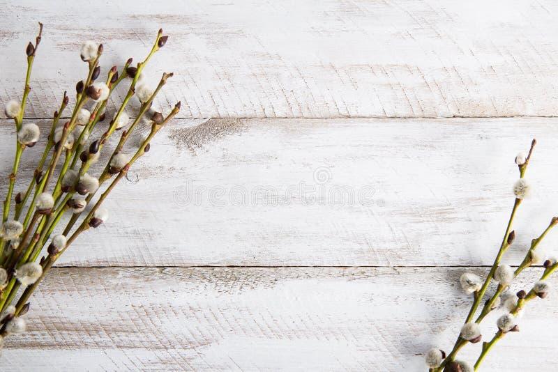 Pussyweidenzweige auf Holztisch lizenzfreie stockfotos