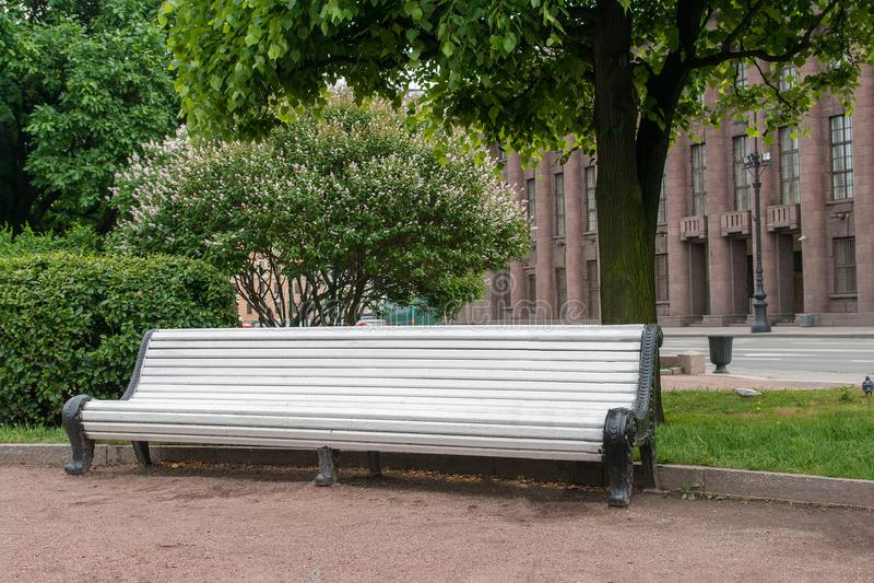 pusta biała drewniana ogrodowa ławka pod kwitnąć drzewa w miasto parku pojęcie miejsce relaksować zdjęcia royalty free