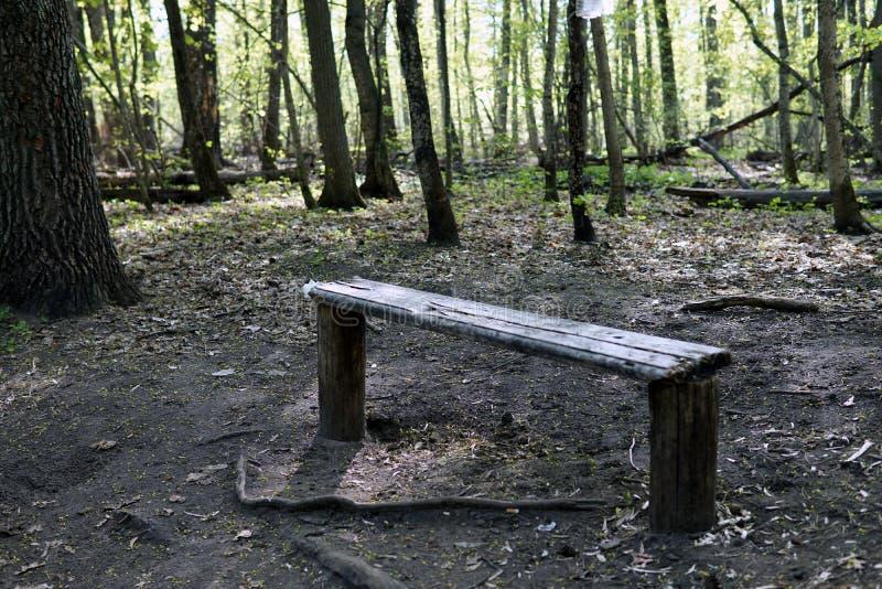 Pusta drewniana ławka w wiosna lesie fotografia royalty free