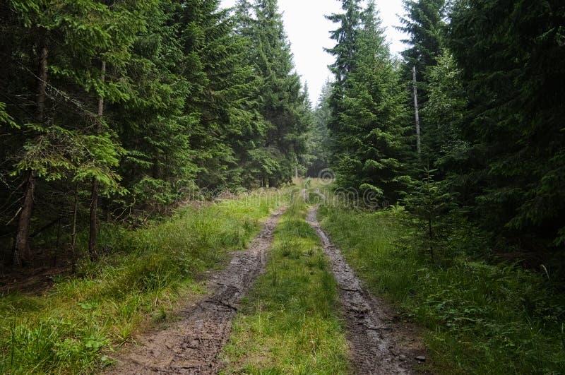 Pusta droga gruntowa w sosnowym lesie po deszczu zdjęcie royalty free