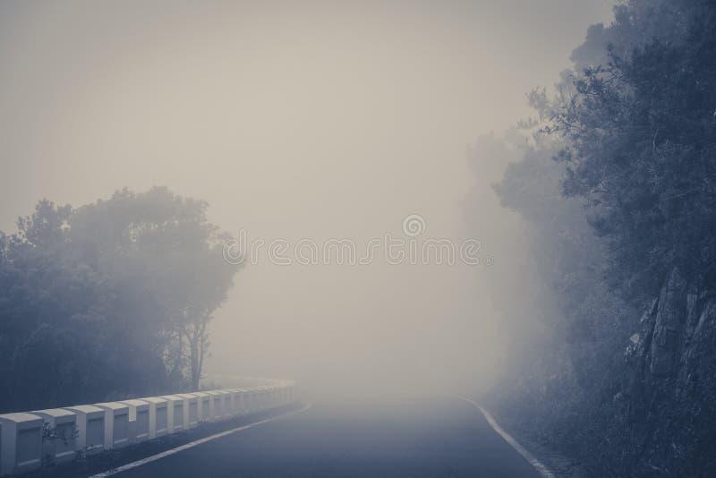 Pusta droga w gęstej mgle w lasu krajobrazie - obrazy stock