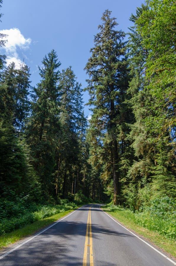 Pusta droga w lesie zdjęcia stock