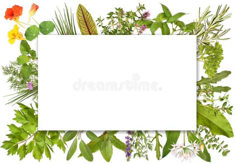 Pusta etykietka obramiająca ziele 1 obrazy stock