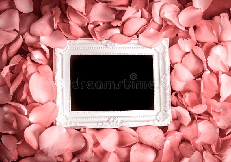 Pusta fotografii rama z płatkiem, romansem i l cukierki menchii róż, fotografia royalty free