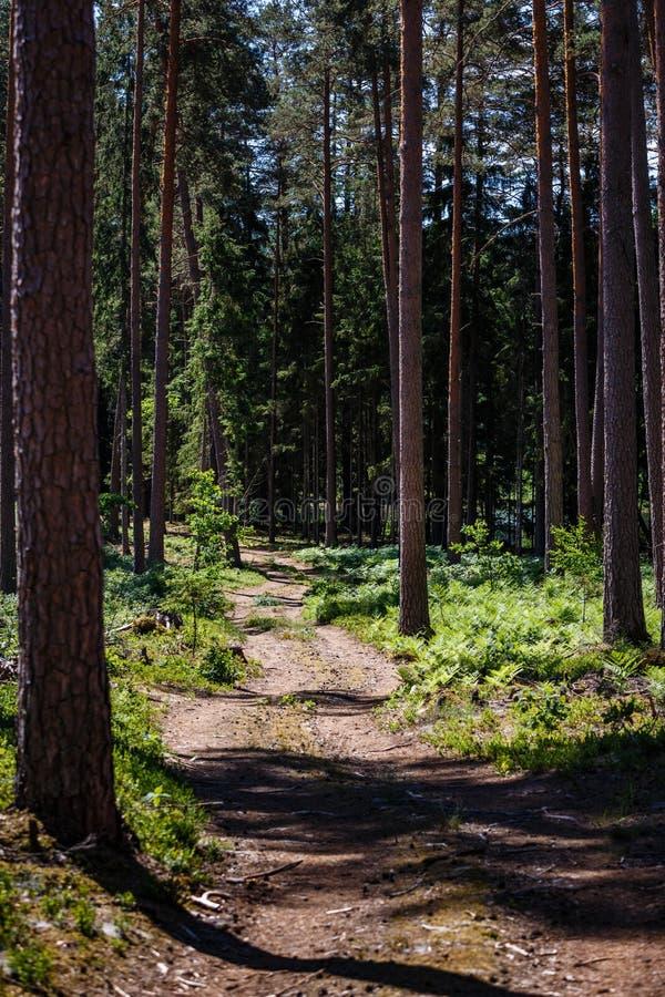Pusta górkowata lasowa droga obrazy royalty free