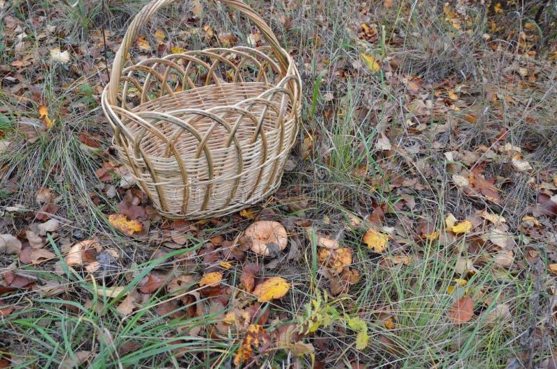 Pusta koszykowa pozycja blisko pieczarkowej czerwieni na lasowej haliźnie zdjęcia stock