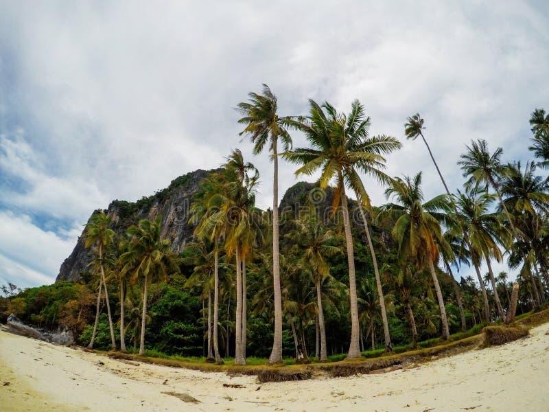 Pusta piasek plaża i drzewka palmowe zaniechana tropikalna wyspa Zwrotnika fisheye fotografii krajobraz zdjęcia stock