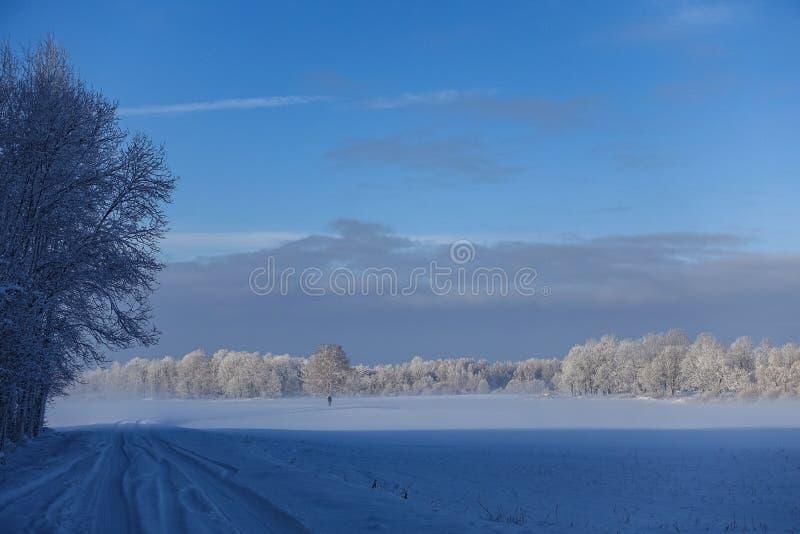 Pusta wiejska droga wzdłuż krawędzi las w zimie zdjęcie stock