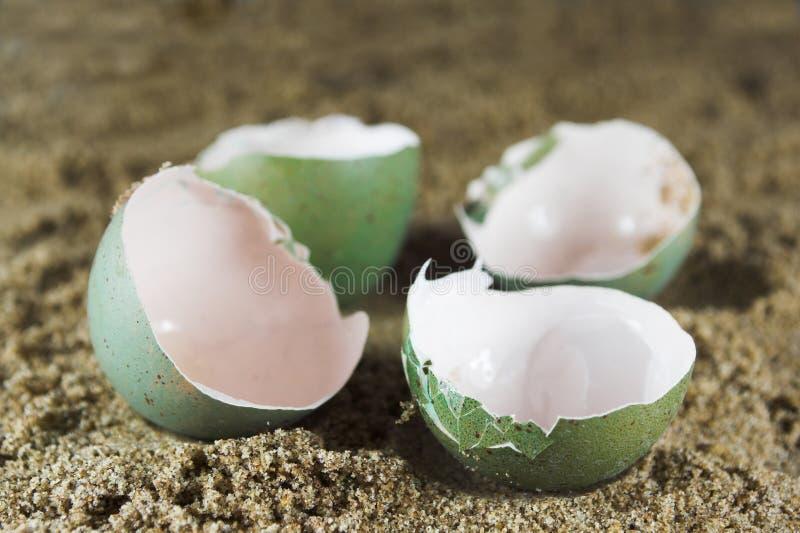 puste jajka obraz stock
