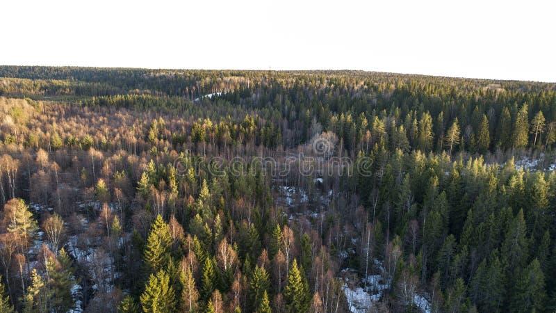 Pustkowi lasowi drzewa w pogodnym wiosna dniu kszta?tuj? teren widok zdjęcia stock