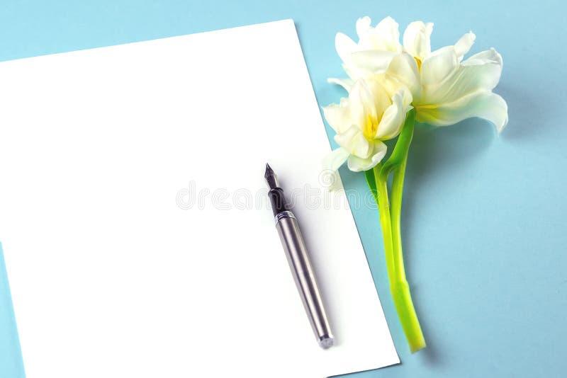 Pusty biały prześcieradło papier na błękitnym tle obok go, kłama pięknego białego tulipanu i atramentu pióra zdjęcie royalty free