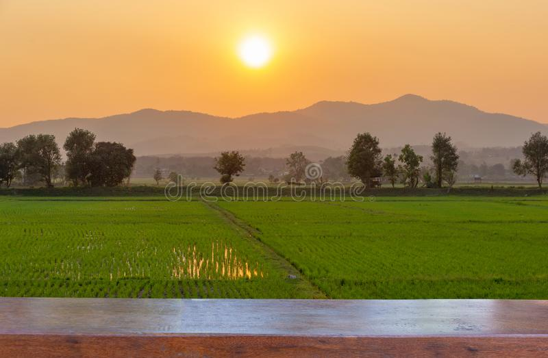 Pusty drewniany stołowy wierzchołek na krajobrazie Zielony ryżu pole z górą na tle w zmierzchu obrazy stock