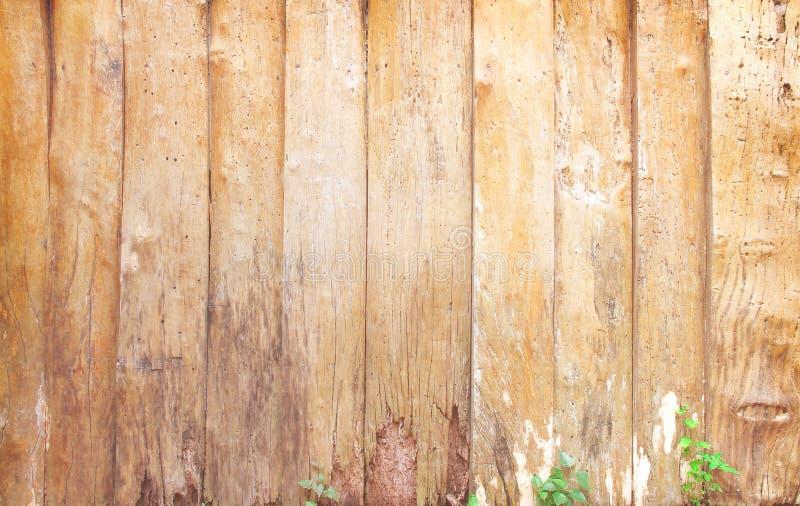 Pusty drewno ściany tło w pionowo wzorach z natury zieloną rośliną na tle fotografia stock