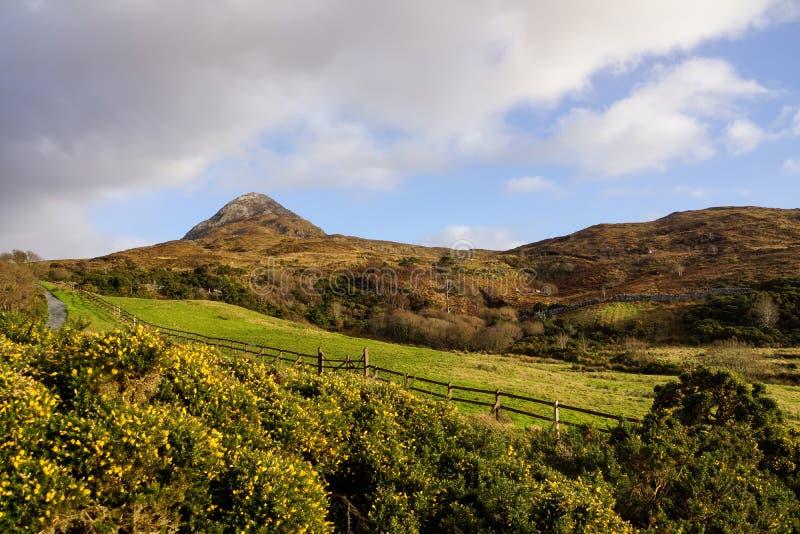 Pusty footpath między łąkami prowadzi góry w dalekiej odległości, niebieskie niebo z bufiastymi chmurami obraz stock