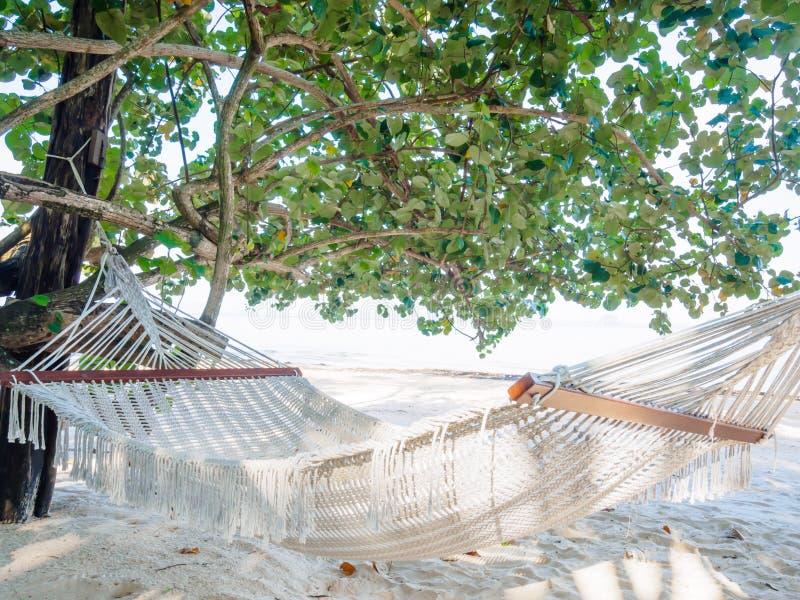 Pusty hamak na tropikalnej plaży z drzewami i pięknym morzem obraz stock