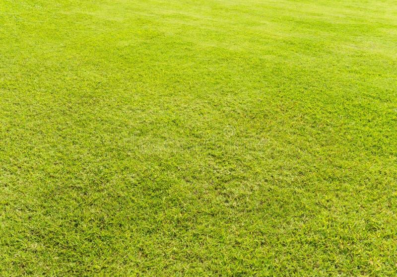 Pusty Jasnozielony trawy pole zdjęcie stock