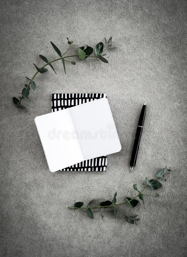 Pusty notatnik i eukaliptus na betonowym tle obraz royalty free