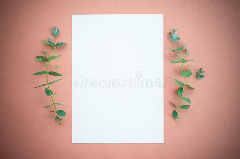 Pusty papier i eukaliptus na rosewood barwili?my kanw? obraz royalty free