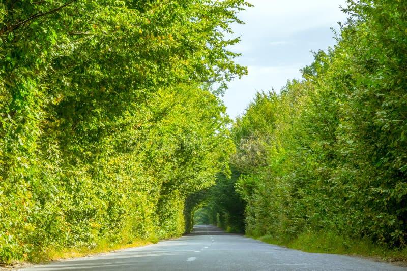 Pusty Wiejski drogi i zieleni drzewa tunel obraz stock