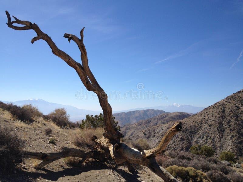 Pustyni i góry krajobraz Joshua drzewa park narodowy fotografia royalty free