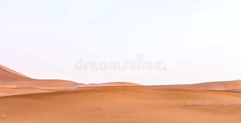 Pustynia z niektóre wielbłądami fotografia stock