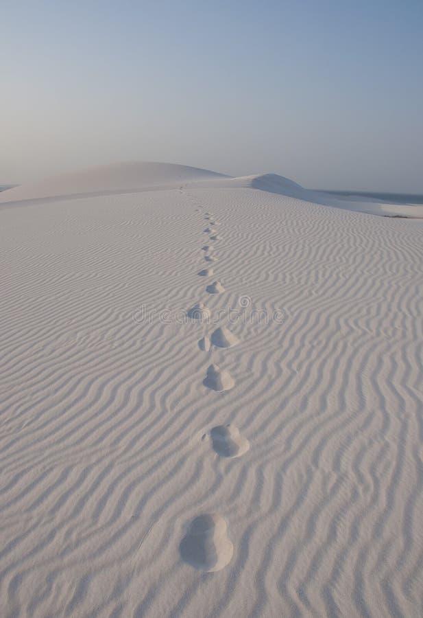 Pustynia z odcisk stopy idzie daleko od. Socotra wyspa fotografia royalty free
