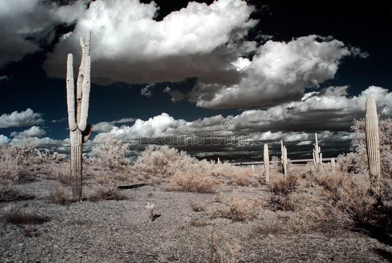 pustynna burza zdjęcie stock