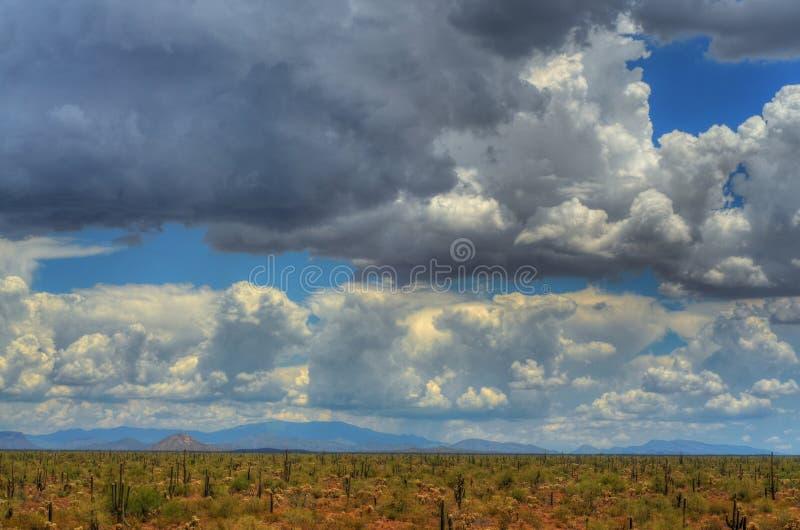 pustynna burza obrazy royalty free