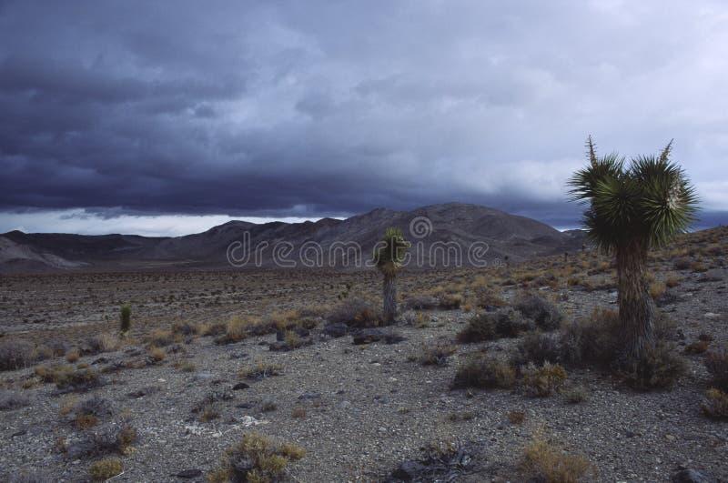 pustynna burza mojave deszczu fotografia stock