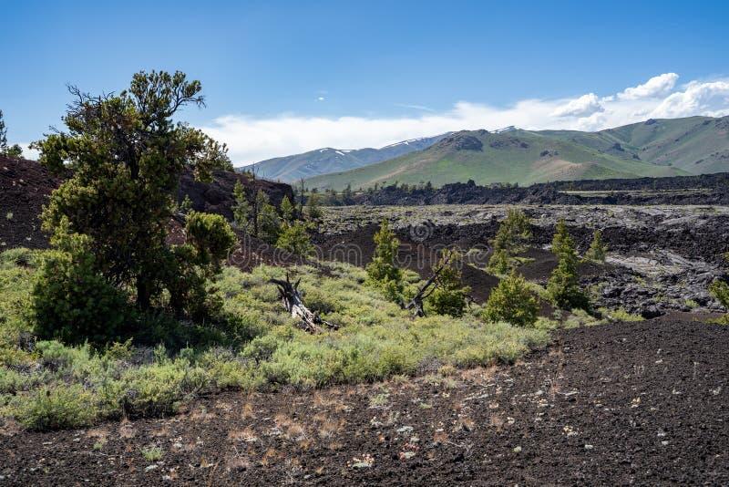 Pustynna bylica, jałowcowi drzewa i lawy skały krajobraz przy kraterami księżyc Krajowy zabytek w Idaho, zdjęcia royalty free