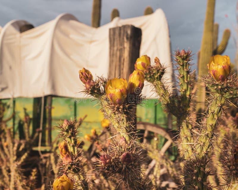 Pustynna Dzika Zachodnia kowbojska scena zdjęcie royalty free