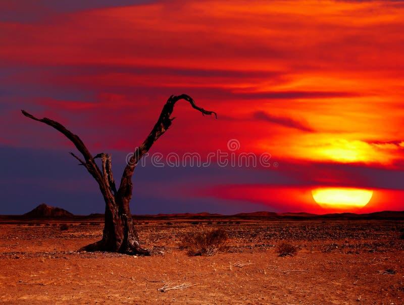 pustynna fantazja obrazy stock