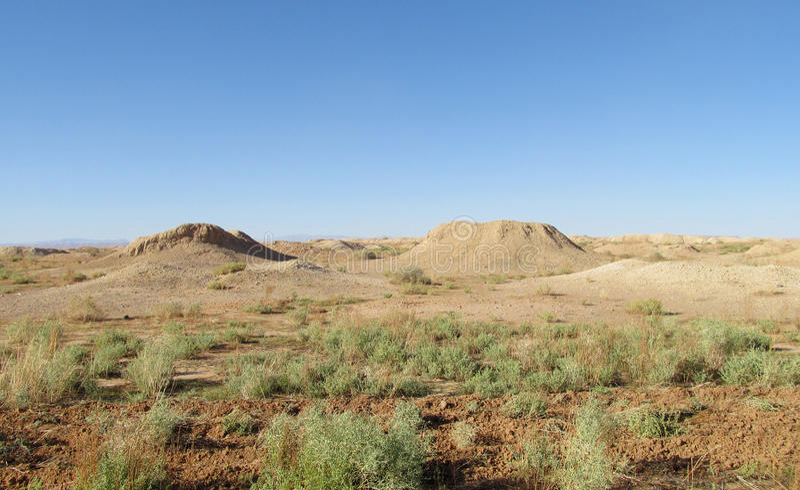 Pustynna krajobrazowa bieda zielenieje roślinność fotografia royalty free