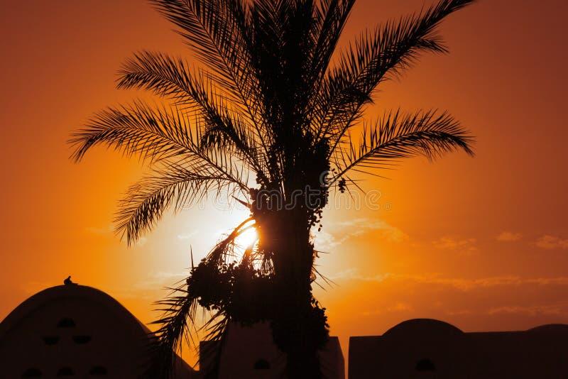 pustynne noce zdjęcie royalty free