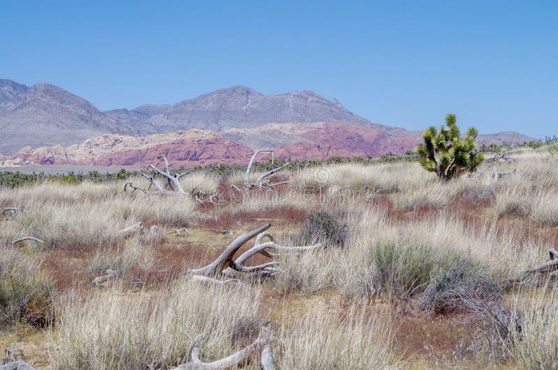 Pustynni widoki, rewolucjonistki konserwacji Rockowy teren, Nevada, usa zdjęcie stock