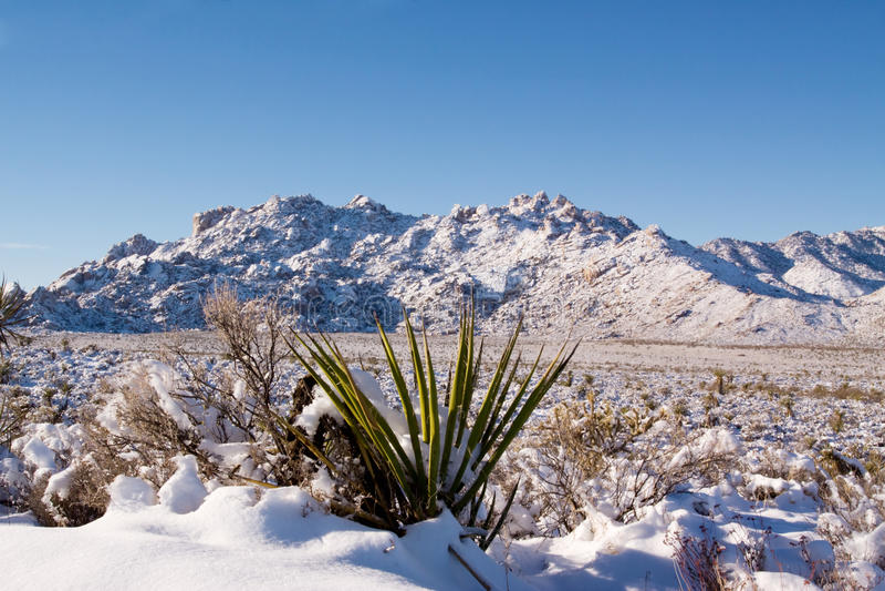 pustynny śnieg fotografia royalty free