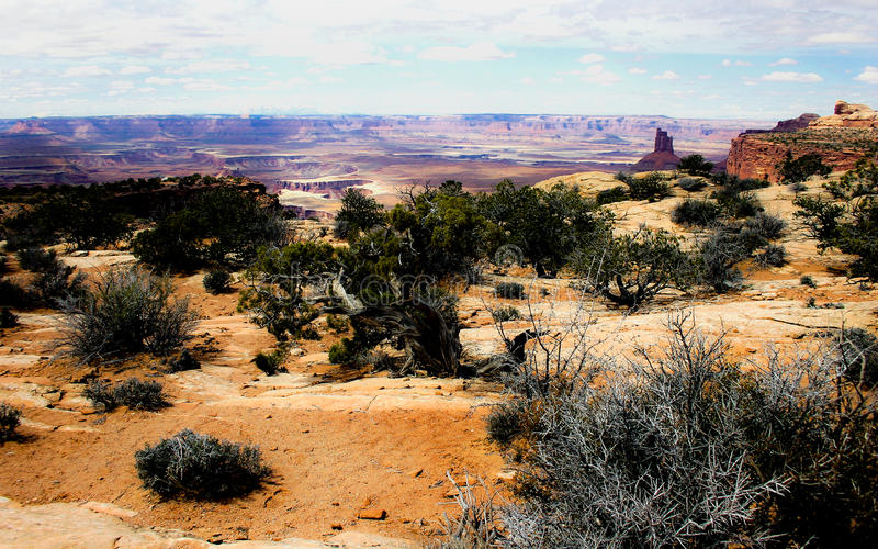 Pustynny Canyonland zdjęcie royalty free