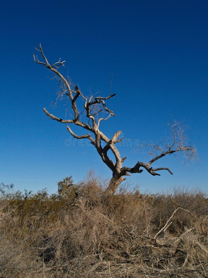 pustynny drzewo nie żyje fotografia stock