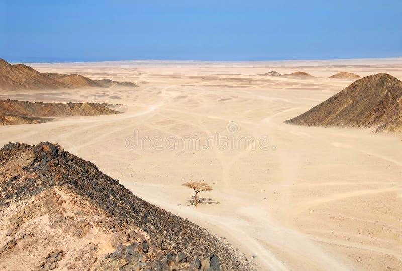pustynny egipcjanin obrazy royalty free