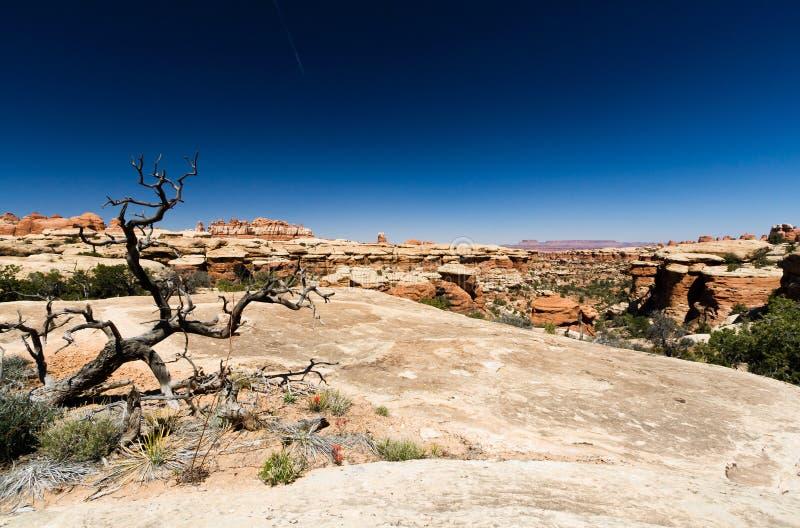 pustynny krajobraz zdjęcia royalty free