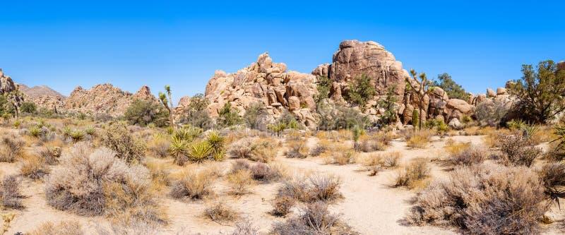 Pustynny krajobraz przy Joshua drzewa parkiem narodowym zdjęcie royalty free