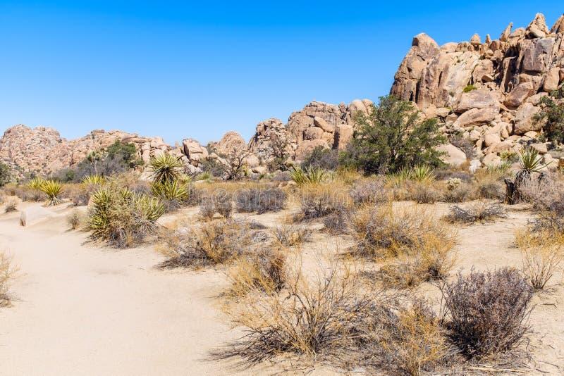 Pustynny krajobraz przy Joshua drzewa parkiem narodowym obraz royalty free