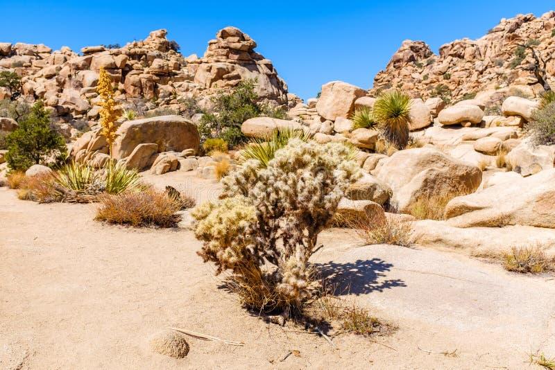 Pustynny krajobraz przy Joshua drzewa parkiem narodowym zdjęcia royalty free
