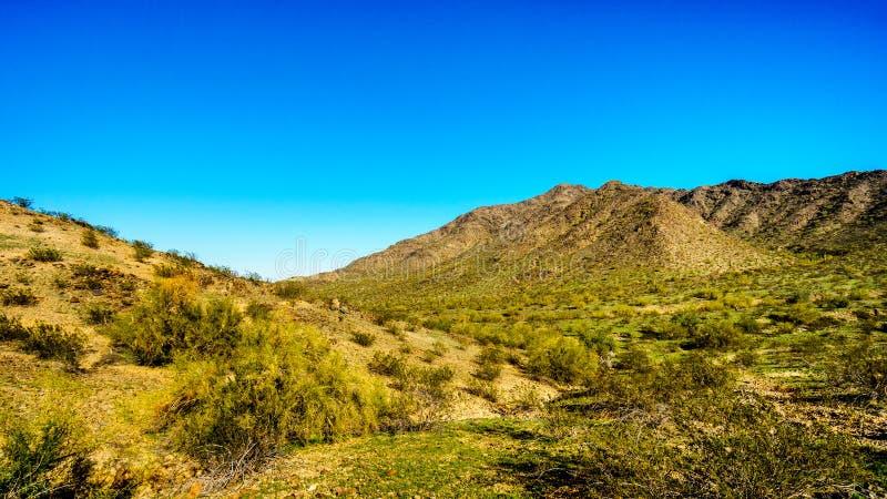 Pustynny krajobraz z Saguaro kaktusami wzdłuż Krajowego śladu blisko San Juan śladu głowy w górach Południowy góra park zdjęcia stock